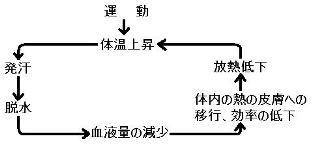 体温上昇の仕組み.JPG